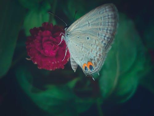 Ingyenes stockfotó 4k-háttérkép, asztali háttérkép, bagoly pillangó, elmosódott háttér témában