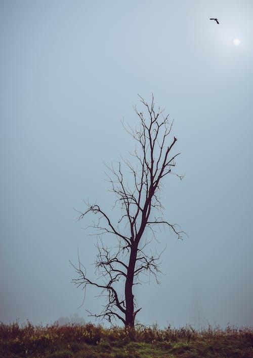 Ingyenes stockfotó csupasz fa, fa, faágak, fű témában