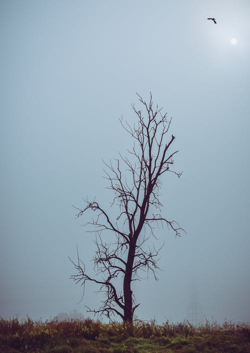 Fotobanka sbezplatnými fotkami na tému holý strom, jasná obloha, modrá obloha, strom