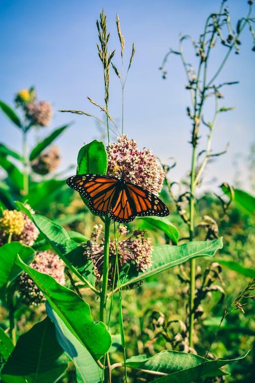 Ilmainen kuvapankkikuva tunnisteilla biologia, eläin, eläinkuvaus, hyönteinen