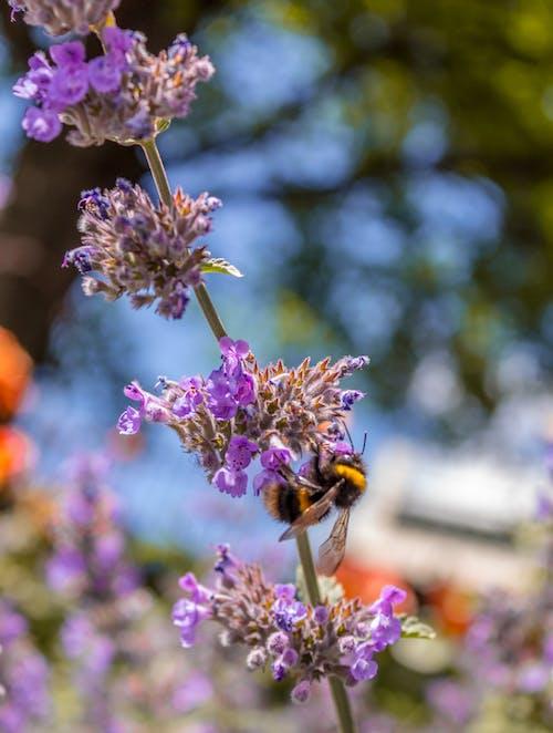 Foto profissional grátis de abelha, animal de pequeno porte, árvore, cânone