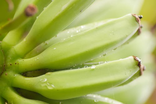 Free stock photo of banana, banana tree, green