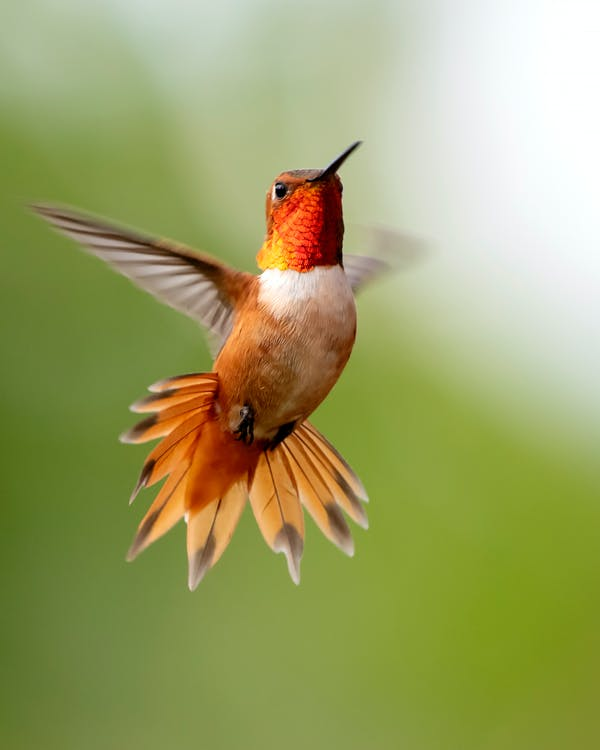 날으는, 동물, 동물 사진