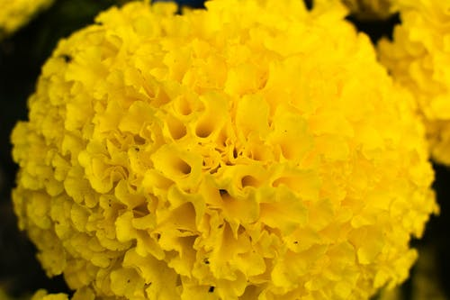 Free stock photo of beautiful flowers, plant, wallpaper, yellow