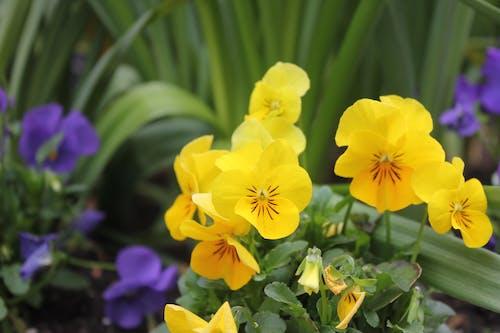 คลังภาพถ่ายฟรี ของ ดอกไม้สีเหลือง