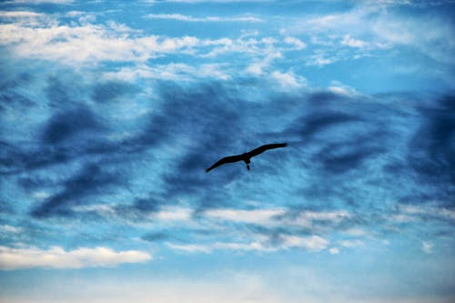 คลังภาพถ่ายฟรี ของ ท้องฟ้า, นก