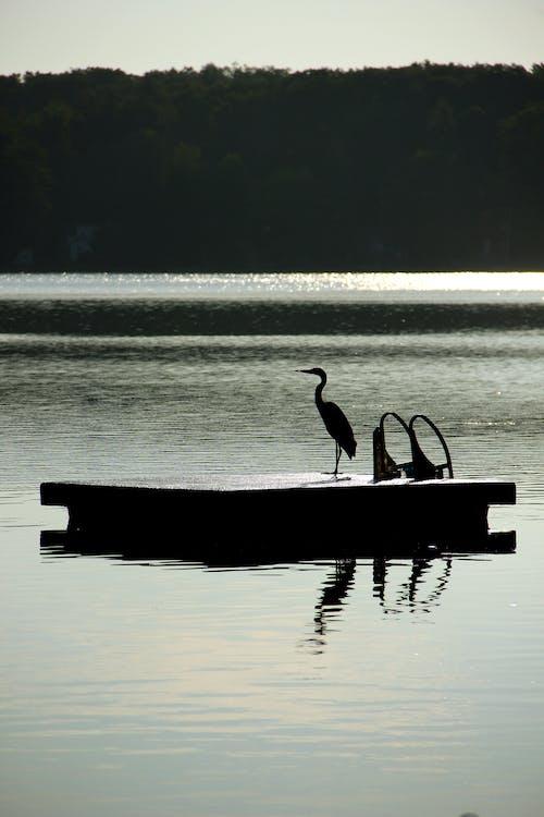 คลังภาพถ่ายฟรี ของ ทะเลสาป, นก, นกกระสา, แพ