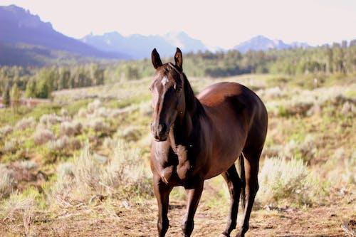 คลังภาพถ่ายฟรี ของ ม้า