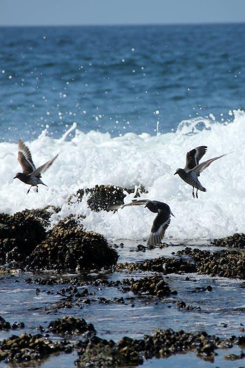 คลังภาพถ่ายฟรี ของ คลื่น, นกนางนวล