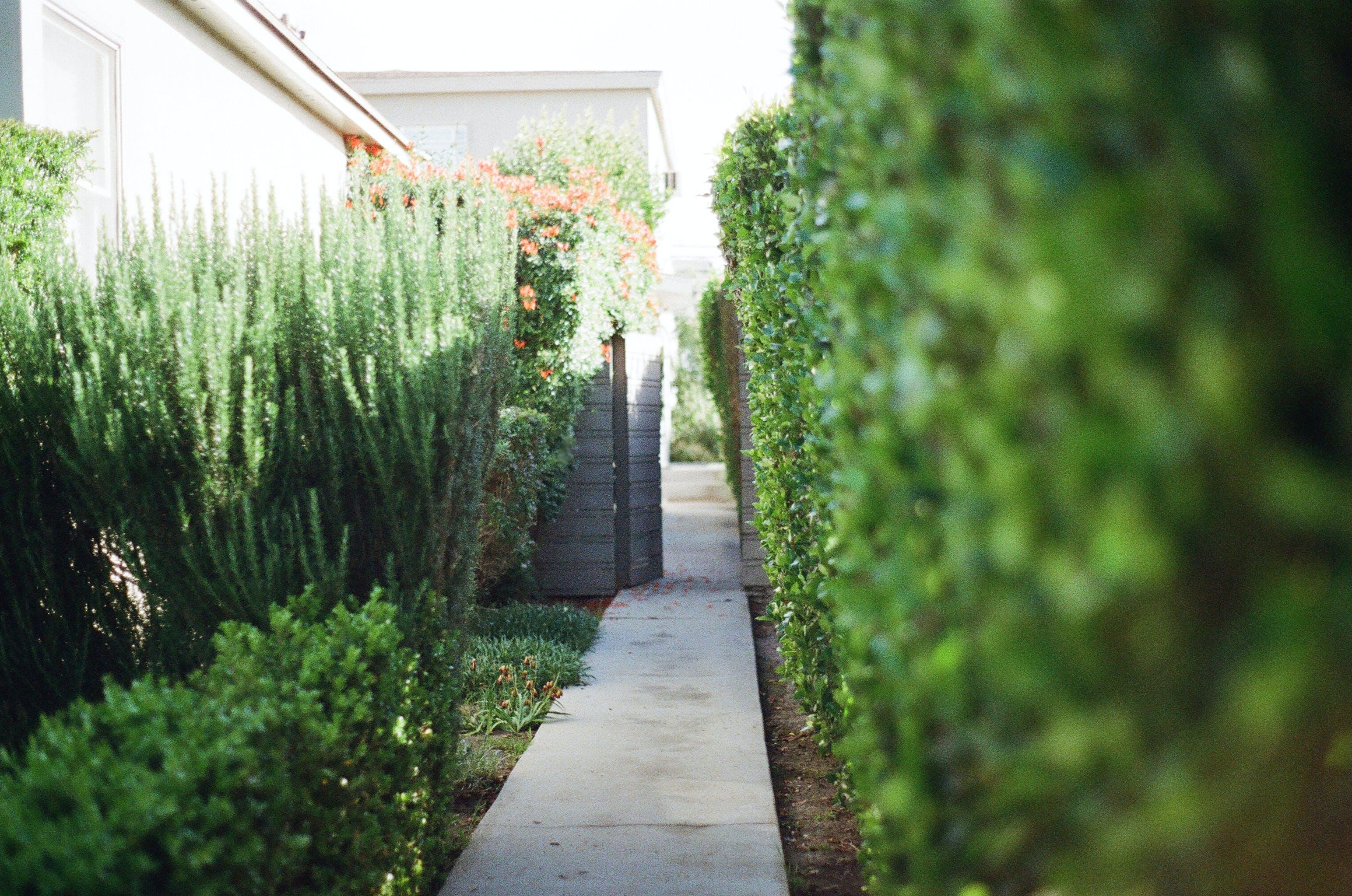 방향, 정원의 무료 스톡 사진
