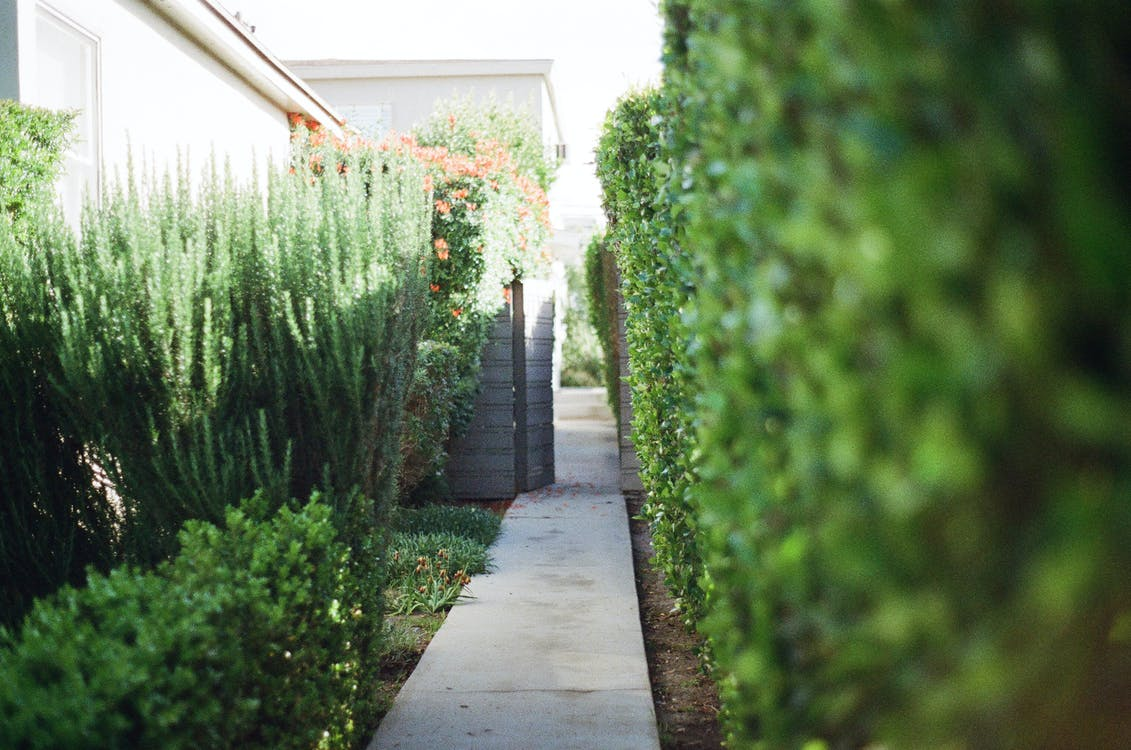 Selective Focus Photography of Narrow Pathway