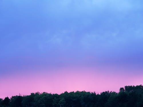 テキサス, 日没, 木, 空の無料の写真素材