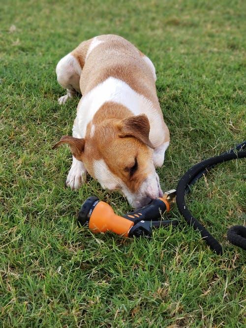 つぶやき, なめる, 犬の無料の写真素材