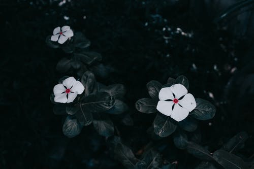 Fotobanka sbezplatnými fotkami na tému 4k tapety, biele kvety, brčál, detailný záber
