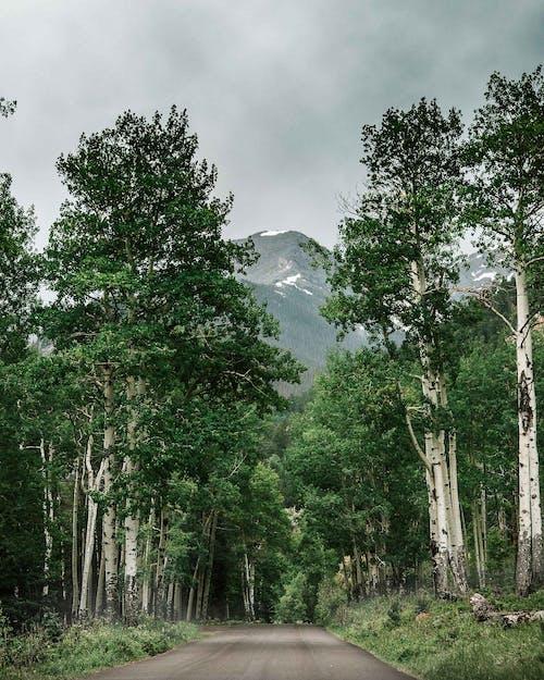 Ilmainen kuvapankkikuva tunnisteilla haapoja, Kalliovuoret, kivinen vuoren kansallispuisto, maisema