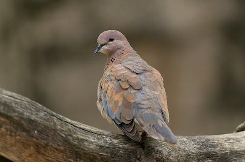 Free stock photo of bird, vogel