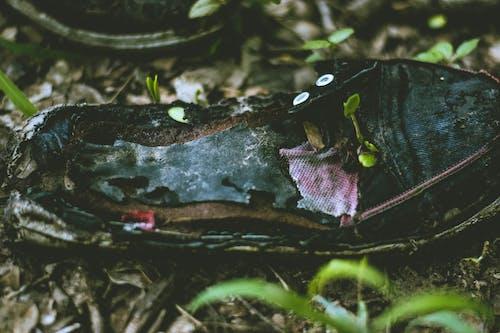 ごみ, ゴミの生活, ラバーシューズ, 園芸植物の無料の写真素材