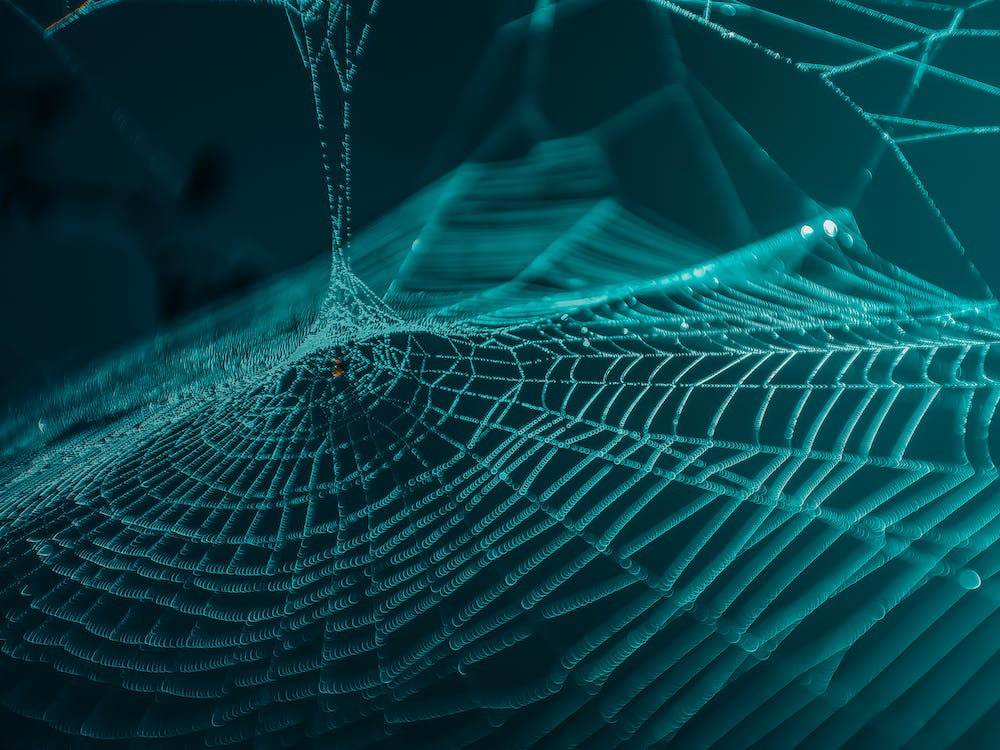 Web Close-up Photography