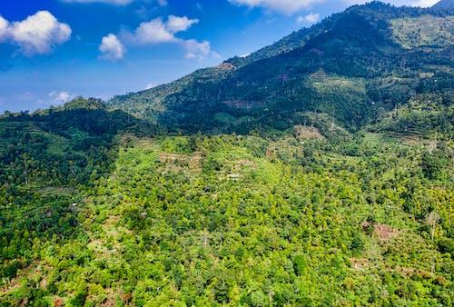 ağaçlar, arazi, çevre, dağ içeren Ücretsiz stok fotoğraf