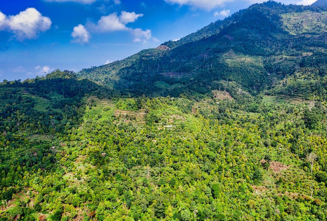 ağaçlar, arazi, çevre