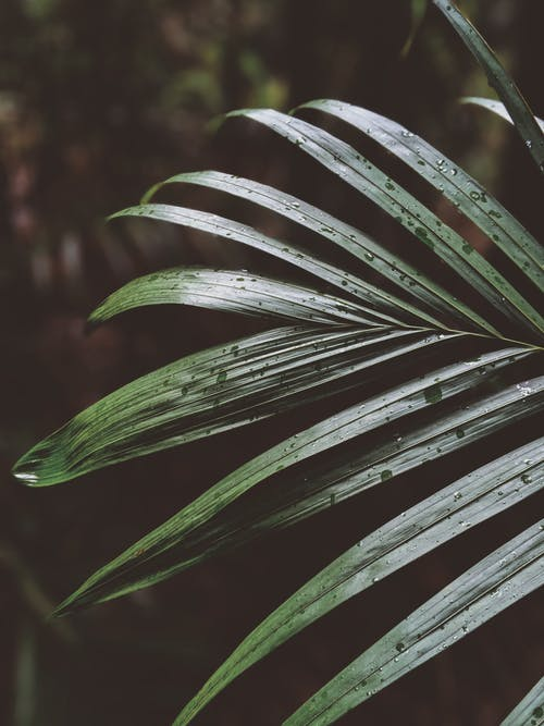 Foto d'estoc gratuïta de botànic, concentrar-se, creixement, desenfocament