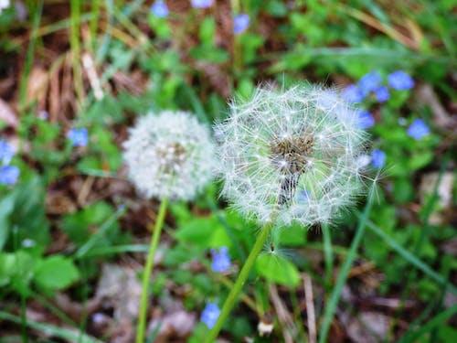 Kostnadsfri bild av blommor, flora, gräs, makro