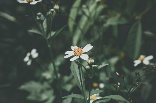 ビンテージ, レトロ, 冷たい花の無料の写真素材