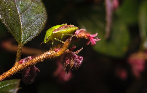 Immagine gratuita di cimice, insetto, macro, natura