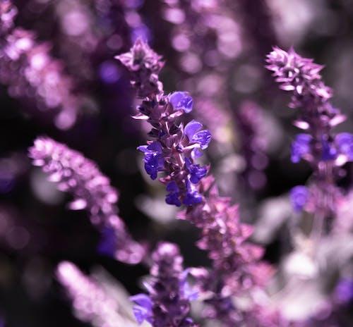 보라색 꽃의 무료 스톡 사진