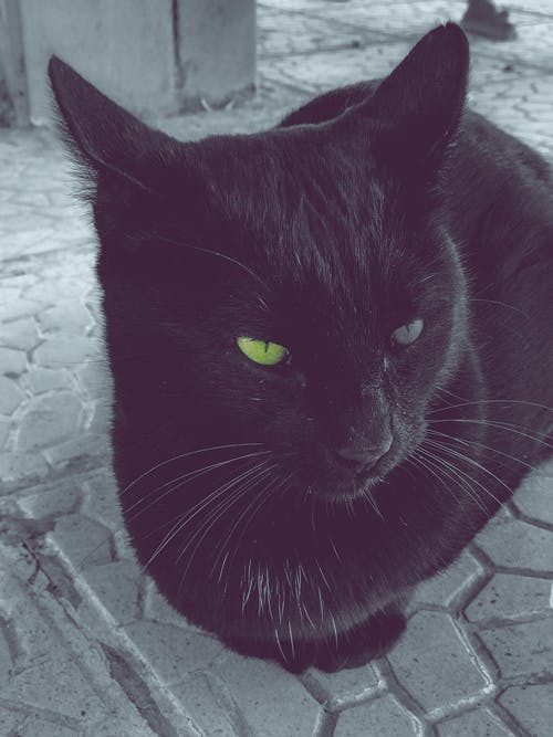 Immagine gratuita di gatto, occhi verdi, occhio di gatto