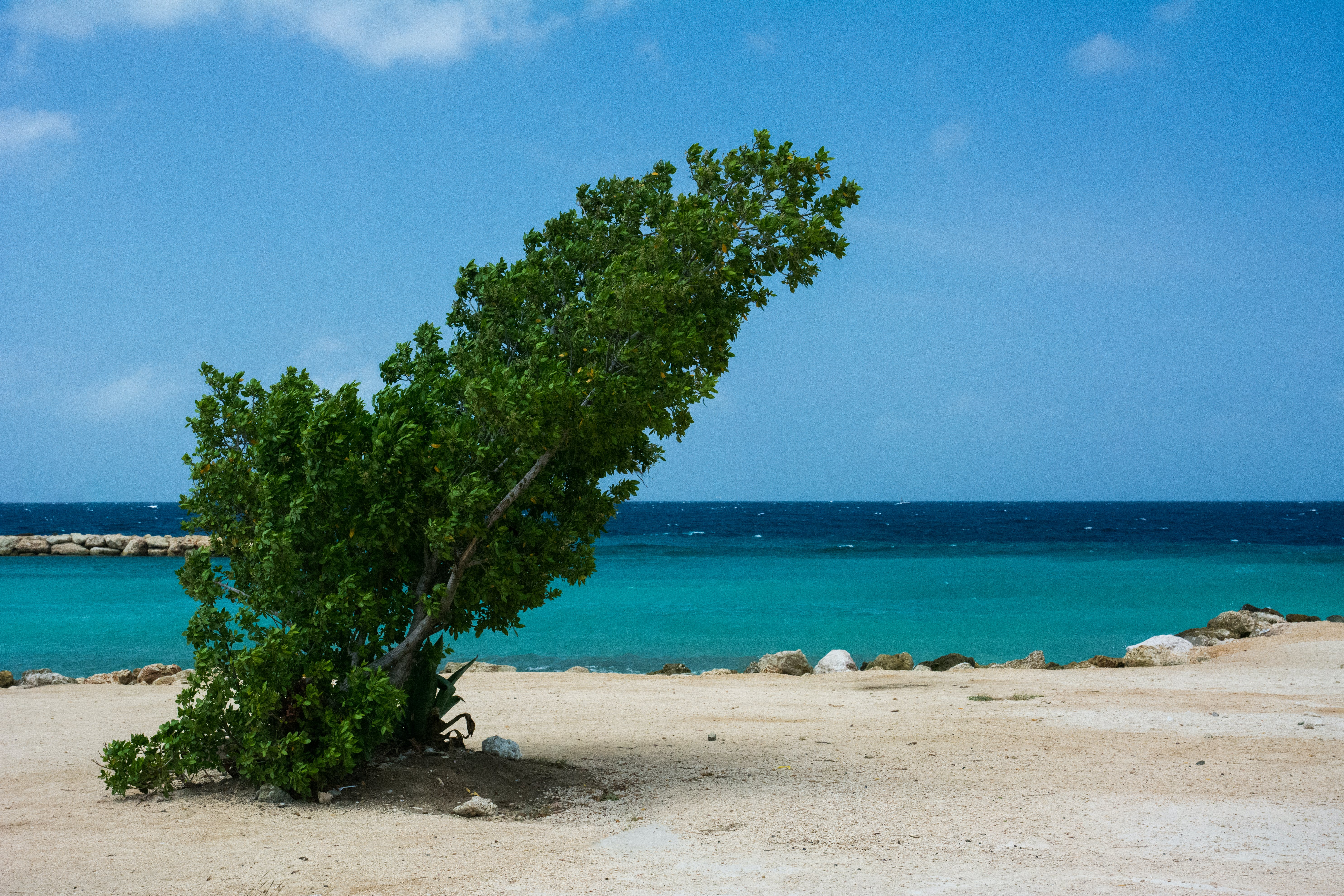 Green Leafed Tree Near Body of Water