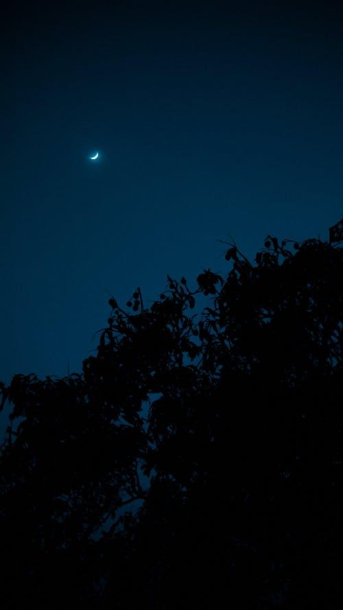 Бесплатное стоковое фото с голубой, дерево, завод, красивая