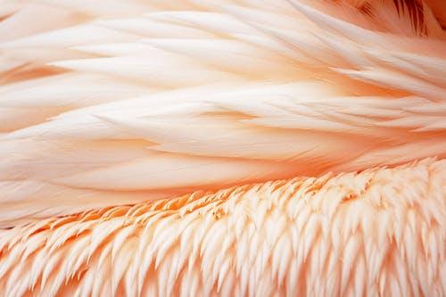 Immagine gratuita di piumaggio, piume, primo piano, sfondo 4k
