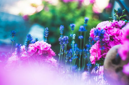 Free stock photo of bloom, blossom, flora, flowers