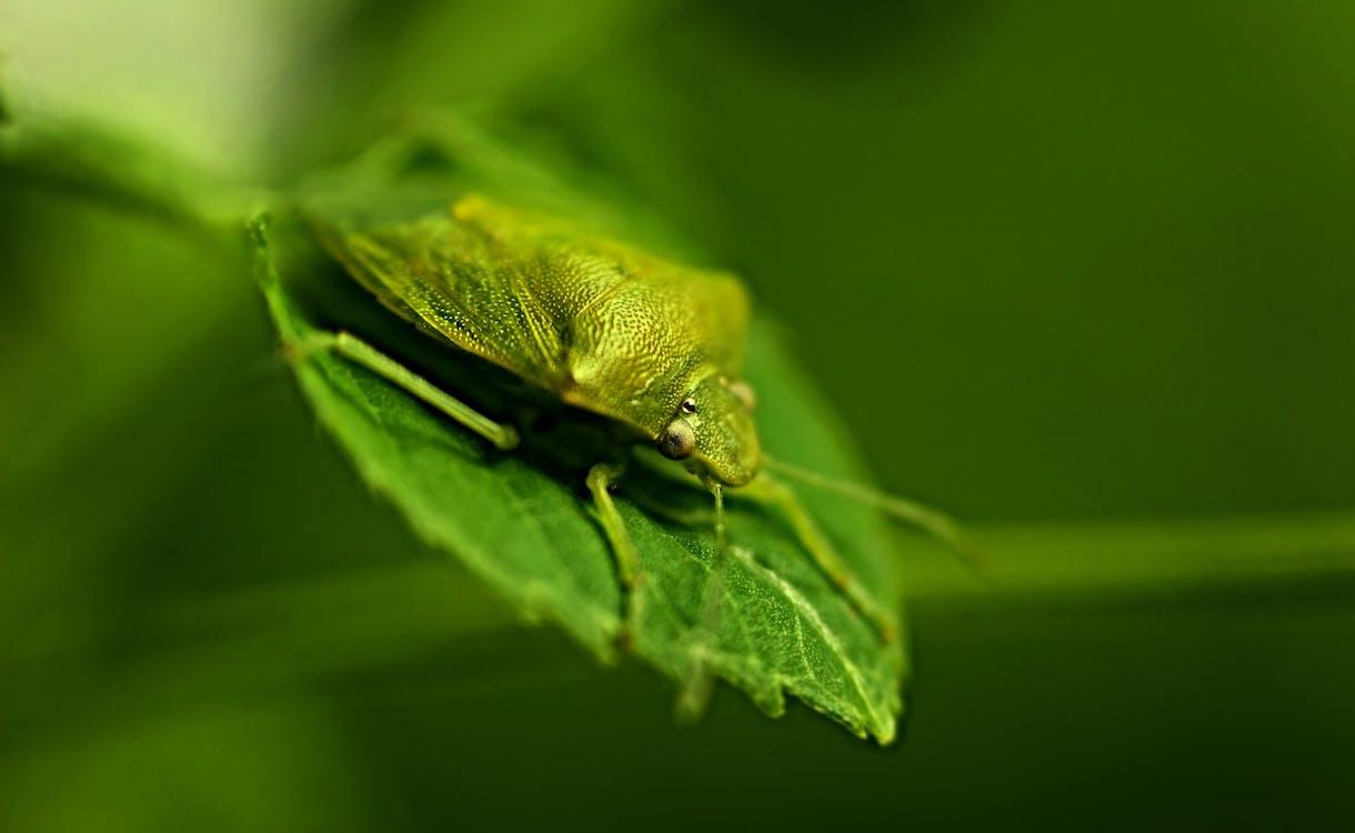 animal, animal salvatge, beetle