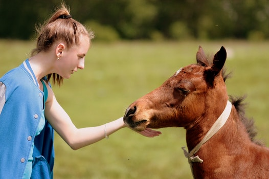 Free stock photo of love, girl, brown, horse
