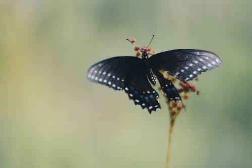 Бесплатное стоковое фото с бабочка, Биология, глубина резкости, дикая природа