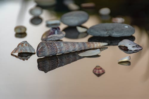 貝殼 的 免费素材照片