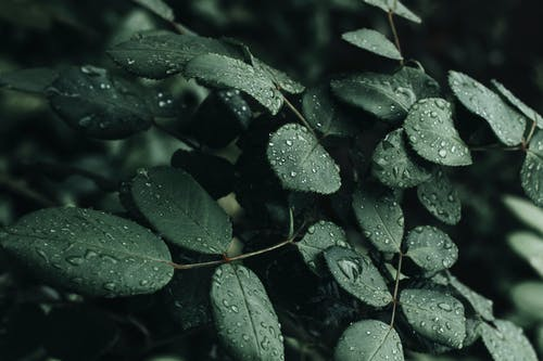 Close-Up Photo Of Wet Leaves