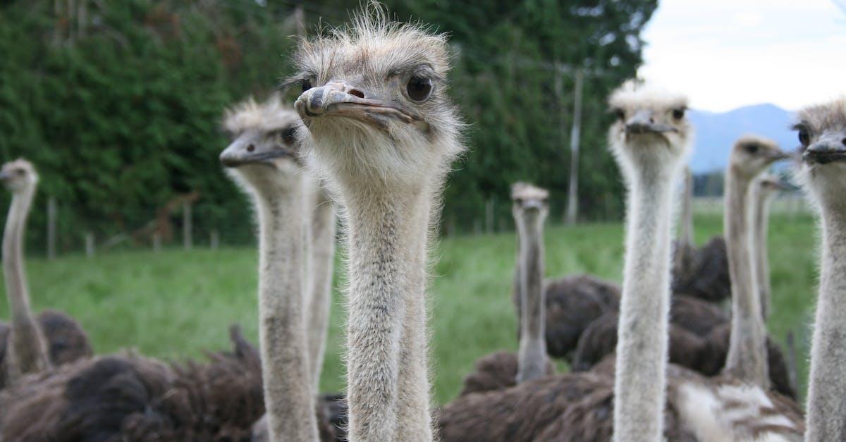 Картинки приколы страус