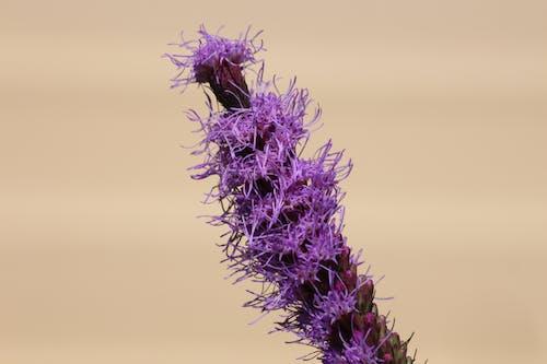 가벼운, 리아 트리스, 별난, 보라색의 무료 스톡 사진