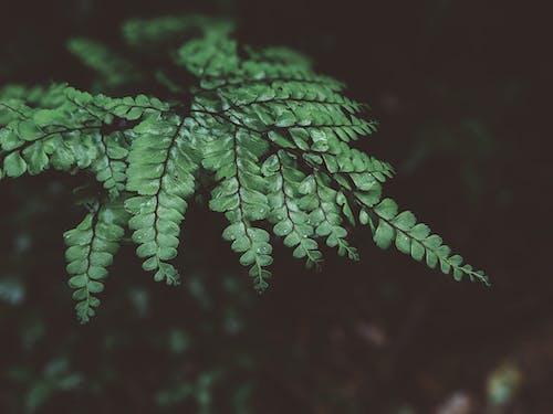 Immagine gratuita di acqua, biologia, concentrarsi, crescita