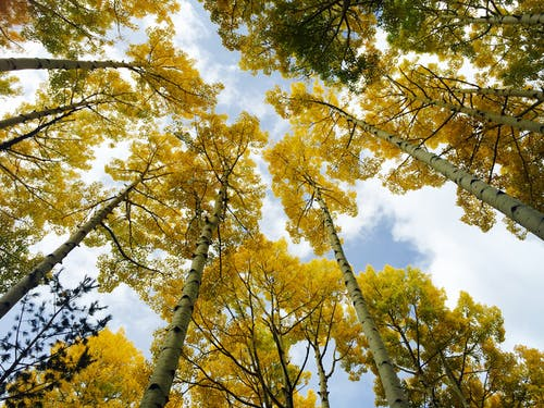 Immagine gratuita di alberi, boschi, foresta, prospettiva