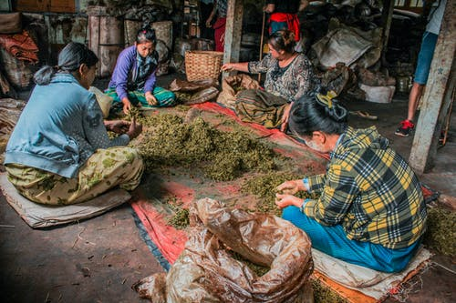 Four Women Sitting on Ground Around Tarpaulin With Brown Dried Leaves