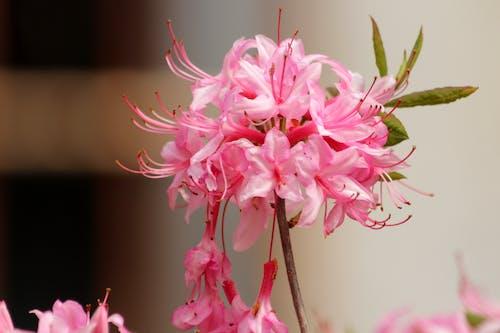 관목, 꽃, 꽃이 만발한 관목, 봄의 무료 스톡 사진