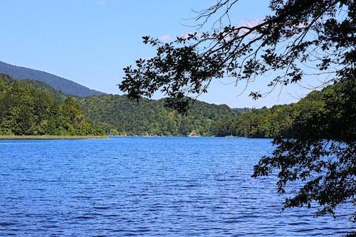 Kostenloses Stock Foto zu bäume, blaues wasser, seen, wald