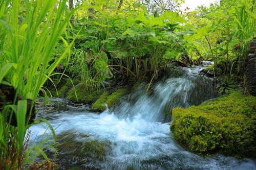 Kostenloses Stock Foto zu bewaldet, fließendes wasser