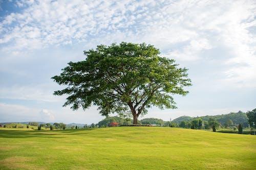 Δωρεάν στοκ φωτογραφιών με γαλάζιος ουρανός, δέντρο, ομορφιά στη φύση, όμορφο τοπίο