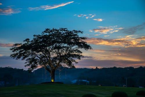 Δωρεάν στοκ φωτογραφιών με γαλάζιος ουρανός, δέντρο