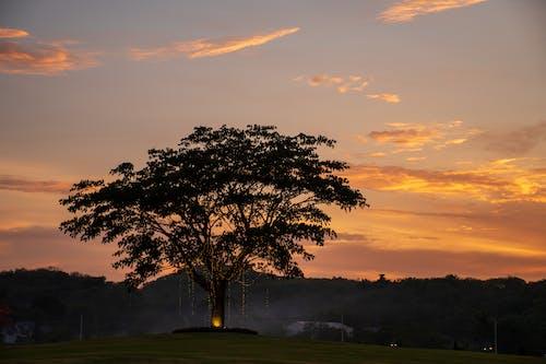 Δωρεάν στοκ φωτογραφιών με βραδινός ουρανός, δέντρο
